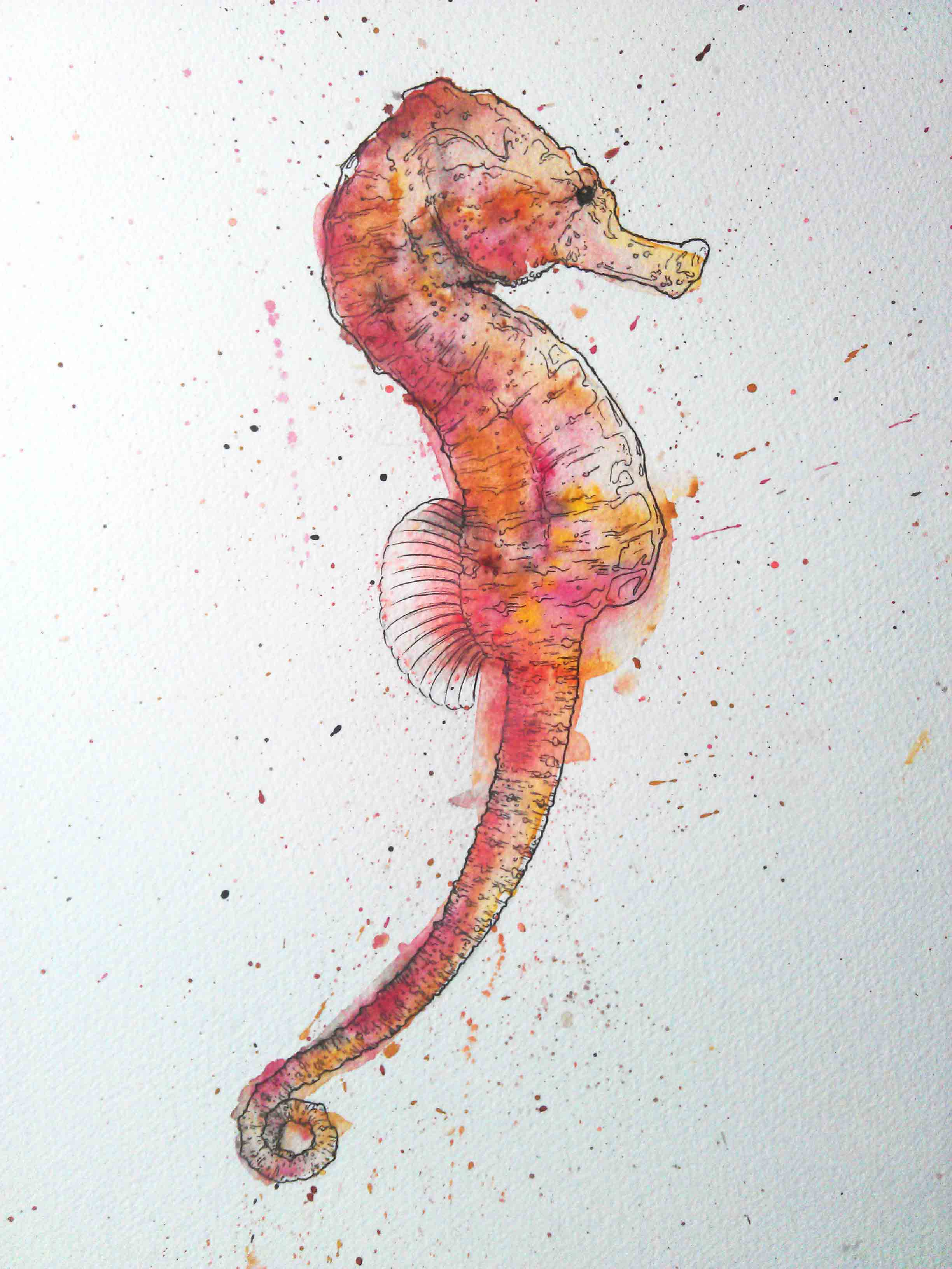 Watercolour Seahorse illustration by Geoff Muskett